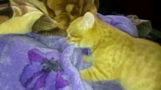 Котенок скучает за кошкой