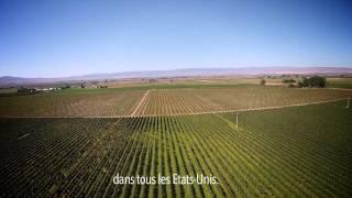 HUILES ESSENTIELLES |  La menthe poivrée de la vallée de Yakima