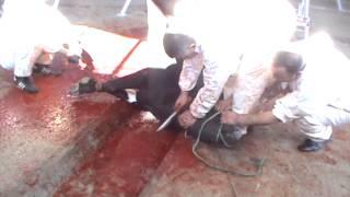 Repeat youtube video Kurban Kesimi 2012 KKB 37