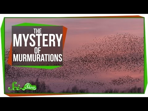 The Math and Mystery of Murmurations