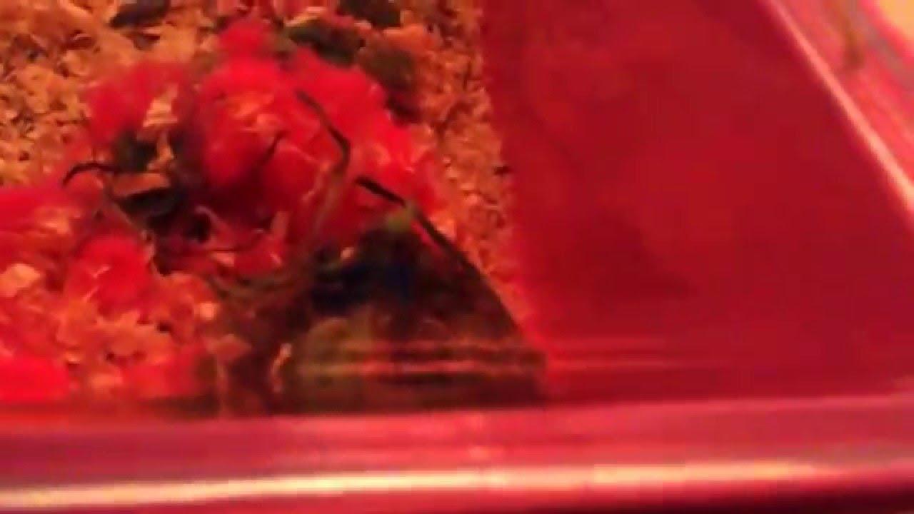 Mijn aller eerste privé huisdier op slaapkamer!! Hamster video#1 ...
