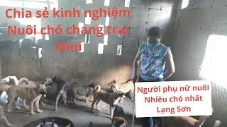 hướng dẫn chăm sóc chó làm trąng trại chó chia sẻ kinh nghiệm nuôi chó kiếm 100 triệu