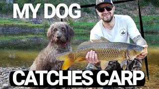 My Fishing DOG Loves Catching CARP  German Wirehaired POINTER