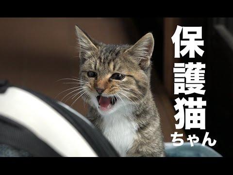かわいい保護猫ちゃん