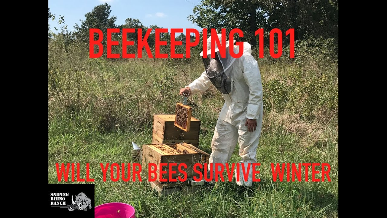 Beekeeping 101:  Getting Your Hives Ready To Survive The Winter