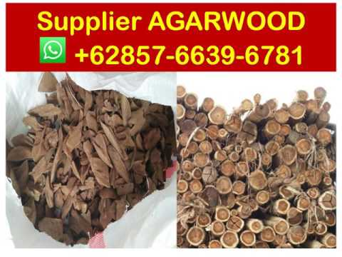 suppliers-+62857-6639-6781-(whatsapp),-agarwood-essential-oil-benefits