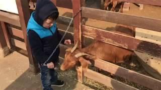 [여행갈래life] 일산아쿠아플라넷 5층 야외동물원 동물먹이2,000원!염소먹이주는 4살아기 너무신기해함!