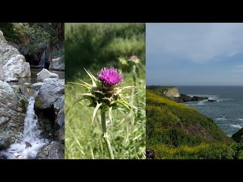 East Bay Regional Parks & Davenport, CA - April 2017 Vlog (Part 2)