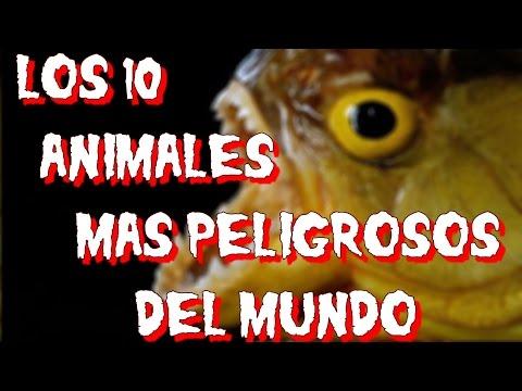 LOS 10 ANIMALES MAS PELIGROSOS DEL MUNDO - 8cho