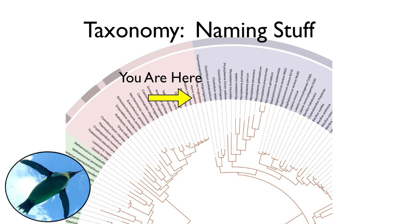 taxonomy and systematics youtube
