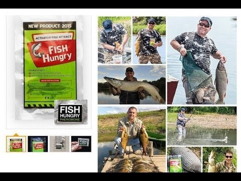 Активатор клёва FishHungry (видеообзор)