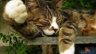Смотреть приколы+про кошек.Прелестно,супер приколы!