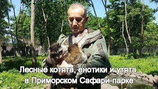 Лесные котята, енотики и утята в Приморском Сафари-парке