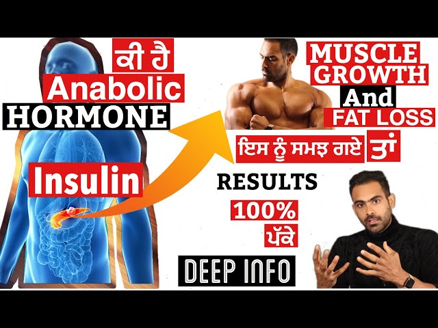 LETS Understand Anabolic Hormone Insulin  For  Muscle Growth   fat loss     DEEP INFO  