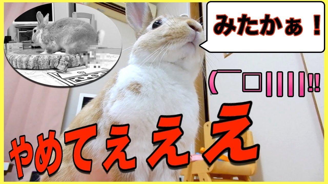 【かわいいペット】うさぎ飼いあるある!?うさぎの仰天行動に飼い主撃沈