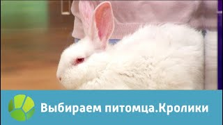 Выбираем питомца с Алексеем Ягудиным. Кролики