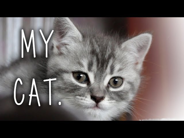 MY CAT | The Cutest Video Ever