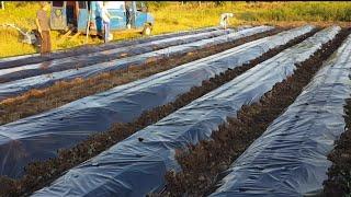 видео Продажа садовых полиэтиленовых пленок для укрытия теплиц и техники