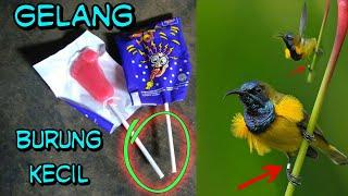Bikin gelang untuk kolibri sogon (burung kecil) yuks.!