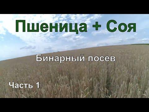 Пшеница + Соя. Бинарный посев