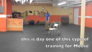 Remote Collar Training Baseline Work