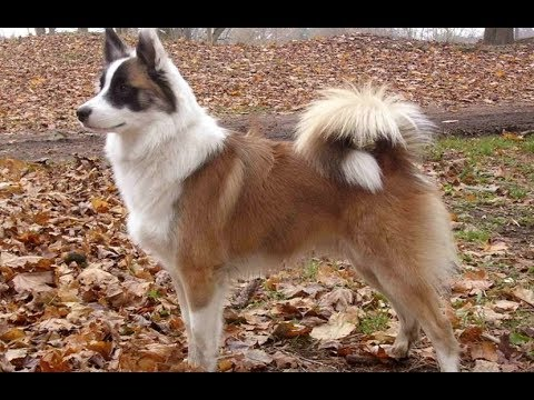 10 Most Beautiful Dog Breeds In The World...