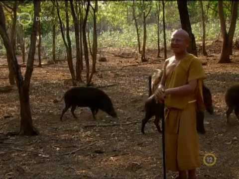 Univerzum   A szerzetes és a tigris