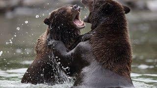 Бойцовский Клуб Для Животных | Документальный Фильм