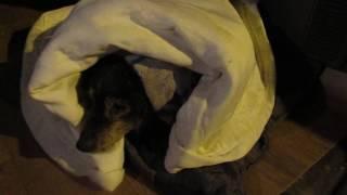 Сбитая собака оледенела от мокрого дождя со снегом  это МИШКА таким его нашли! ❀ Лохматая Душа