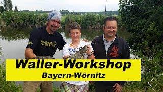 Waller Workshop Bayern / Fluss Wörnitz / Wallerholz / Auslegen / Tauwurm By Stefan Seuß