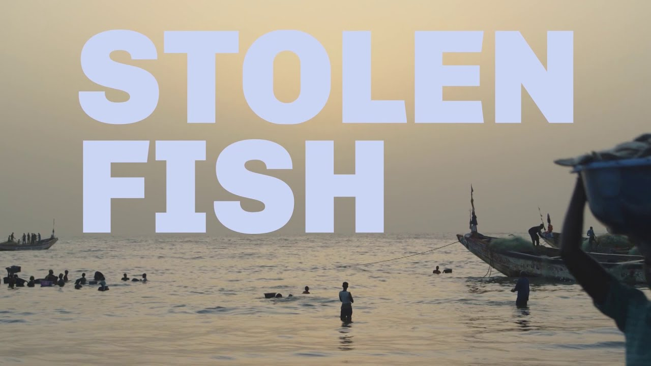 Stolen Fish - YouTube