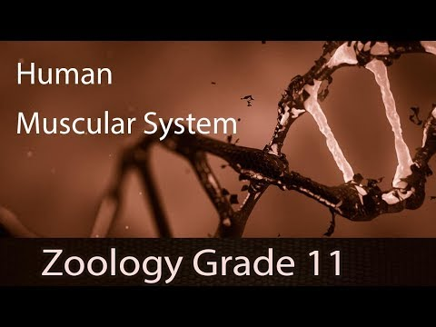Locomotion & Movement | Human Muscular System (Contd..) | Types Of Muscles | Explanation | Part 3