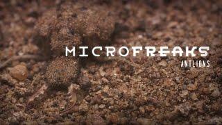 Antlion: The predator in the pit   MicroFreaks