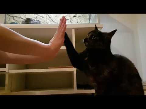 Cat tricks with Haiku