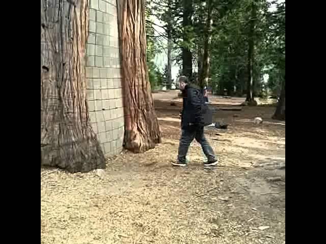 Uruguayo desaparece en bosque encantado