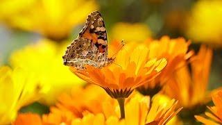 Самая красивая природа в мире подборка 7 показ слайдов 2015!(Природа и Путешествия - Самые красивые места на Земле - 2015 Уникальные места и пейзажи на нашей плане, все..., 2015-06-02T18:22:01.000Z)