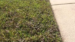 Lawn Service Jacksonville FL | Weed Control