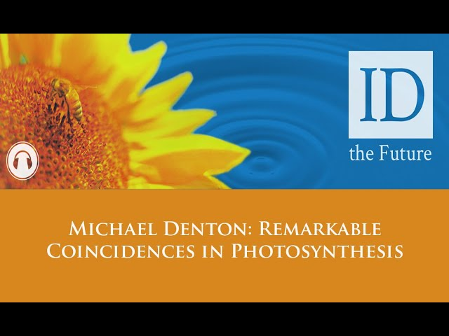 Michael Denton Remarkable Coincidences in Photosynthesis  -- ID The Future Podcast
