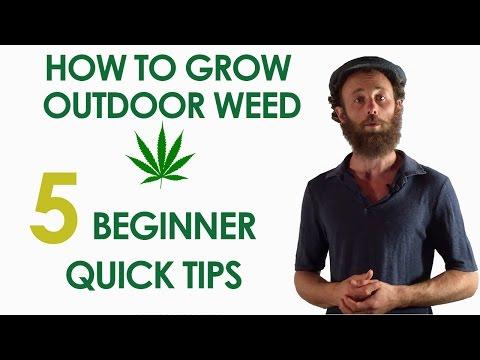 5 Beginner Quick Tips For Growing Outdoor Weed