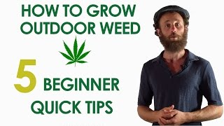 5 Beginner Quick Tips for Growing Outdoor Weed