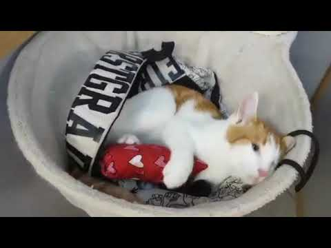 Katteleg.com - Duftposer