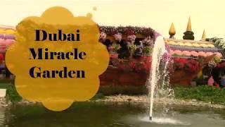 Удивительный парк цветов Dubai Miracle Garden