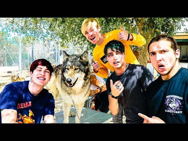 WE ADOPTED A WOLF! w/ Sam, Colby, Corey & Jake
