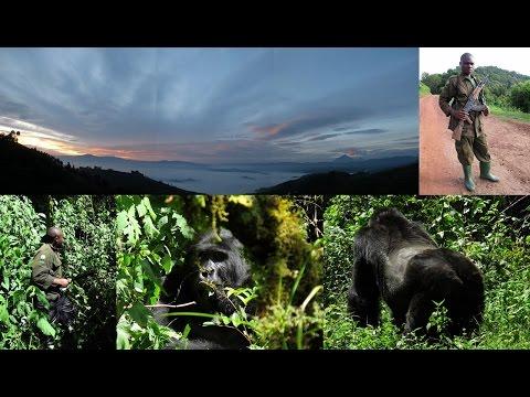 31-33. ΟΥΓΚΑΝΤΑ, ΚΟΝΓΚΟ, ΡΟΥΑΝΤΑ - UGANDA, CONGO: gorilla, beringei, Bwindi, Virunga (photos)