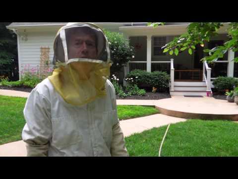 Bald-faced Hornet Treatment