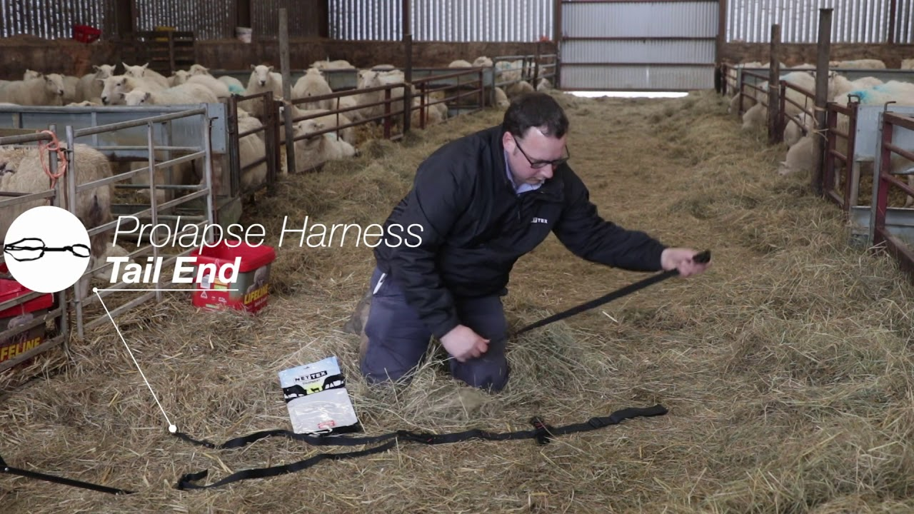 Ewe Prolapse Harness By Net-tex