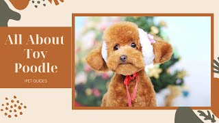 Toy Poodle – All About The World's Cutest Dog Breed