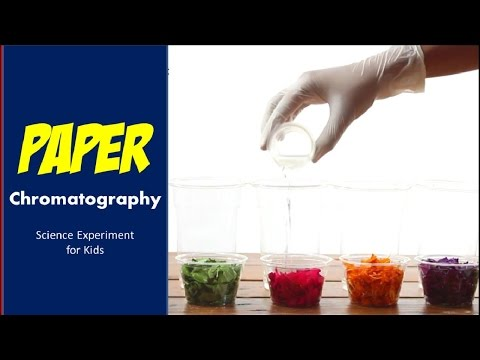 Paper chromatography Science Experiment for Kids