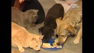 """Жительница Адлера организовала приют бездомных животных """"на дому"""""""