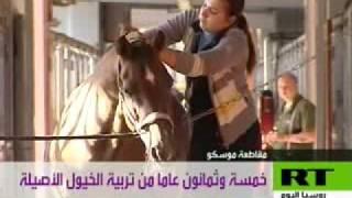 85 عاما من تربية الخيول الأصيلة